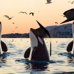 Три кита мужчиностроения